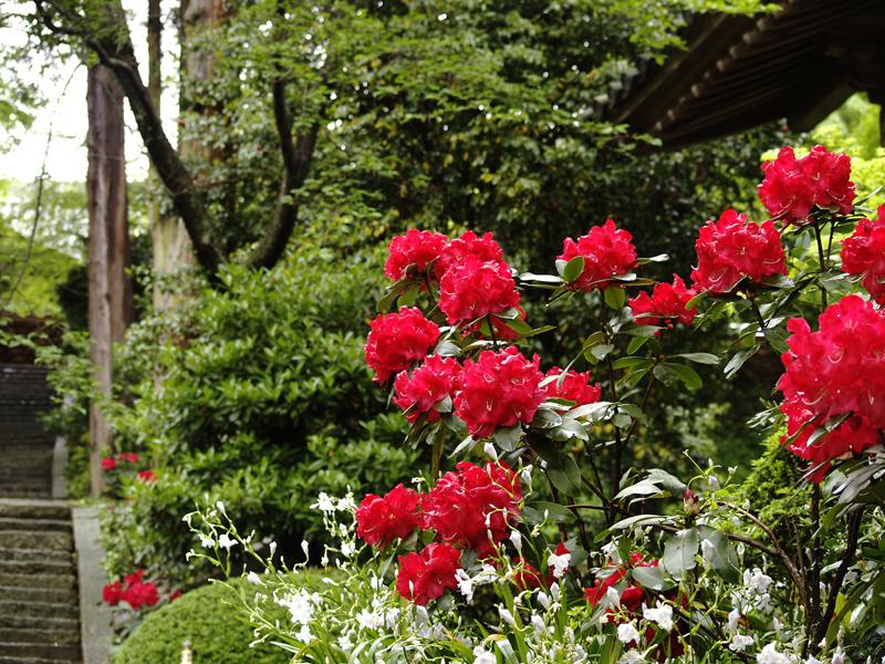 白峯寺の春