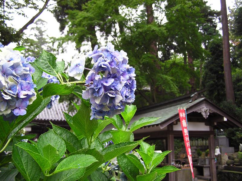 白峯寺の夏